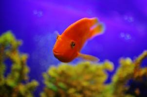 cá trong bể