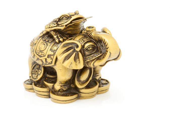 voi vàng