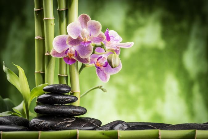 tre và hoa lan
