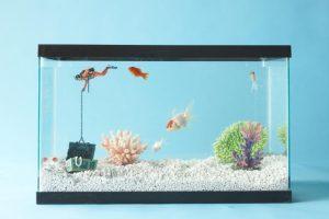 Bể cá trong phòng màu xanh