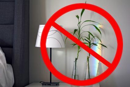 không có cây trong phòng ngủ