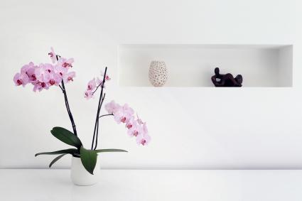 Cây phong lan và đồ trang trí