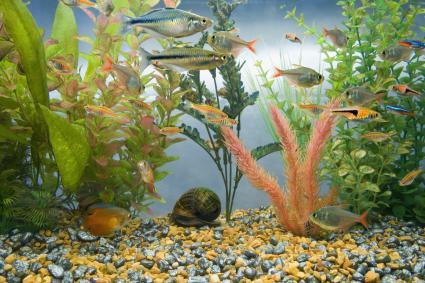 Bể cá đầy cá nhiệt đới đầy màu sắc.