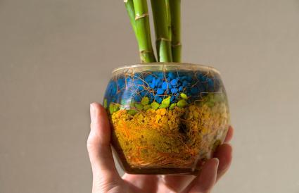 Cây tre trong chậu hoa thủy tinh
